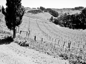 vinmark på waiheke
